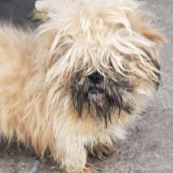Found dog on 02 Mar 2021 in Tallaght. found, now in the dublin dog pound...Date Found: 01/03/2021 Location Found: Tallaght