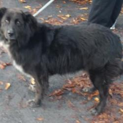 Found dog on 02 Nov 2017 in Naas Road , Clondalkin. found,now in the dublin dog pound... Date Found: Tuesday, October 31, 2017 Location Found: Naas Road , Clondalkin