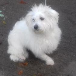 Found dog on 02 Nov 2017 in St Melruans Park , Tallaght ... found, now in the dublin dog pound... Date Found: Wednesday, November 1, 2017 Location Found: St Melruans Park , Tallaght