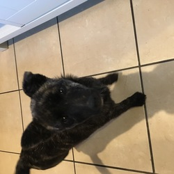 Reunited dog 02 Oct 2018 in GMIT, Galway City. Young terrier/cross. No collar. Not chipped. REHOMED.