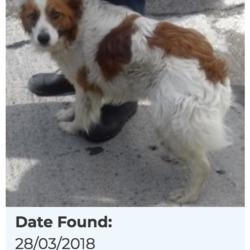 Found dog on 03 Apr 2018 in Ballymount. found, now in the dublin dog pound...Date Found: 28/03/2018 Location Found: Ballymount