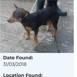 Found dog on 03 Apr 2018 in Belgard Road. found, now in the dublin dog pound...Date Found: 31/03/2018 Location Found: Belgard Road