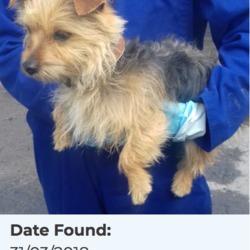 Found dog on 03 Apr 2018 in Belgard Road, Tallaght. found, now in the dublin dog pound...Date Found: 31/03/2018 Location Found: Belgard Road, Tallaght