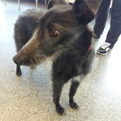 Found dog on 03 Apr 2018 in Carpenterstown . found.,..Active VetCare  Dog found in Carpenterstown area. Currently with finder. Please contact our Hillcrest branch on 01- 8213189. Proof of ownership required.