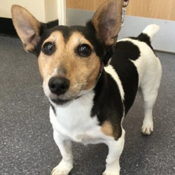 Found dog on 03 Aug 2018 in Dorset street. found...Active VetCare Page Liked · 58 mins ·    This little guy was found on Dorset street at lunch time today. He is currently with his finder. Please call Village Vets Cabra on 01-8680119 for more information. Strict proof of ownership will be required.