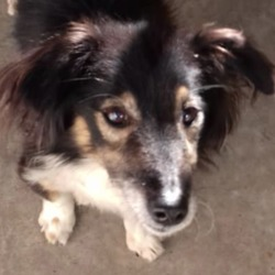 Found dog on 03 Dec 2019 in Tower Court Ballivor. found...Meath Dog Shelter 2 hrs ·  STRAY REF 329 Female found Tower Court Ballivor Elderly small minature collie type dog. Wearing collar No ID tag Not chipped. Very hungry and under weight & slightly shy. Finder said found 3 weeks ago. PLEASE PHONE 0870973911 with any info proof of ownership & fee required to reclaim