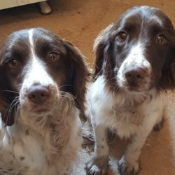 Found dog on 03 Jan 2019 in Athlone/... found....These 2 dogs were found this morning at Rooskey Cross / Bealnamulla/ Just outside Athlone/ Co. Roscommon..please share to find the owners...Lost, found, missing in Donegal and beyond.