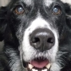 Found dog on 03 Jan 2020 in bettystown. found Allpets Veterinary HospitalLike Page 1 hr ·  Black labradór Cross found in Bettystown. Please contact Allpets 0419810000