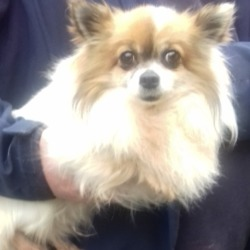 Found dog on 03 May 2019 in Location Found: Tallaght Village. found, now in the dublin dog pound...Date Found: 29/04/2019 Location Found: Tallaght Village
