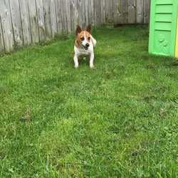 Found dog on 03 Nov 2017 in  Fordstown. found...5yr old Jrt...ref 312...found in Fordstown with Sadie...contact Meath pound on 087 0676766...thanks