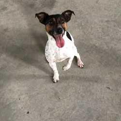 Found dog on 03 Nov 2017 in Fordstown Kells . found...1yr old Jrt...ref 311...found in Fordstown Kells with Sara...contact Meath pound on 087 0676766...thanks