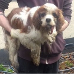 Found dog on 03 Oct 2018 in Cookstown Tallaght. found, now in the dublin dog pound...Date Found: 02/10/2018 Location Found: Cookstown Tallaght