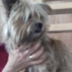 Found dog on 03 Oct 2019 in ATHBOY AREA. found..Meath Dog Shelter September 26 at 3:10 PM ·  STRAY REF FOUND ATHBOY AREA PLEASE PHONE 0870973911 10-3PM Female not chipped no collar.