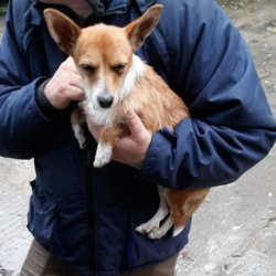 Reunited dog 03 Oct 2019 in Tallaght. UPDATE REUNITED....found, now in the dublin dog pound...Date Found: