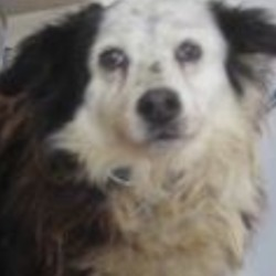 Reunited dog 04 Apr 2019 in avoca. UPDATE REUNITED....found..Wicklow Dog Pound