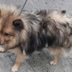 Found dog on 04 Apr 2019 in Daletree Est. found, now in the dublin dog pound..Date Found: 01/04/2019 Location Found: Daletree Est