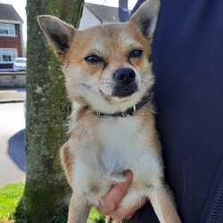 Found dog on 04 Apr 2021 in Whitehall dublin. Dog found in whithall area