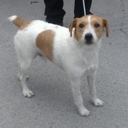 Found dog on 04 Aug 2017 in Grangecastle , Clondalkin. found, now in the dublin dog pound.. Date Found: Thursday, August 3, 2017 Location Found: Grangecastle , Clondalkin