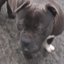 Found dog on 04 Feb 2020 in DeansrathPark. found, now in the dublin dog pound..Date Found: 29/01/2020 Location Found: Deansrath Park