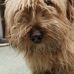 Found dog on 04 Jan 2019 in naas..... found...