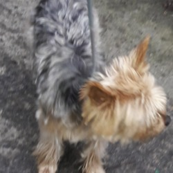 Found dog on 04 Jan 2019 in palmerstown. found, now in the dublin dog pound...Date Found: