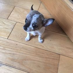 Found dog on 04 Jun 2019 in Drimnagh.. found...Dogs Aid