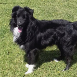 Reunited dog 04 Jun 2020 in Johnstown, Navan. UPDATE REUNITED...found...Meath Dog Shelter ref  86 Stray collie found in Johnstown, Navan. Lovely friendly boy, well looked after. No microchip or name tag Proof of ownership and reclaim fee apply Contact 0870973911