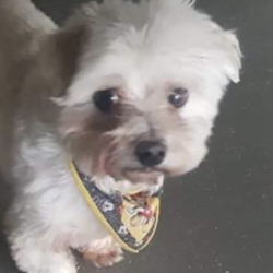 Found dog on 04 May 2021 in navan. found...Meath Dog Shelter tSp8onsnomrmedo  ·  Ref 52  stray NOT AVAILABLE FOR REHOMING This little dog was picked up in Woodlands, Navan.  Proof of ownership and reclaim fee apply Contact 0870973911