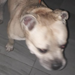 Found dog on 04 Nov 2019 in Ballyowen Road. found, now in the dublin dog pound...Date Found: