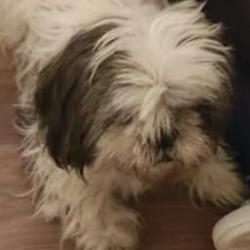 Found dog on 05 Dec 2019 in balbriggan. found...Balbriggan skerries lost Dogs and Cats · December 2 ·    Dog found next to Peter and Paul's School, Balbriggan.