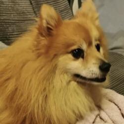 Found dog on 05 Dec 2019 in  Bremore Pastures area of Balbriggan. found...Balbriggan skerries lost Dogs and Cats · December 2 ·    Dog found in the Bremore Pastures area of Balbriggan.