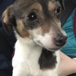 Found dog on 05 Jan 2020 in cavan. found...Missing Dogs IrelandLike Page 18 hrs ·  dumped out of white van #cavan on new years eve with another dog but finder has no details on the other please share
