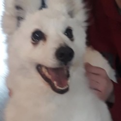Found dog on 05 Jan 2020 in maynooth. found...K.W.W.S.P.C.A. 22 hrs ·  Found, Maynooth area, contact 0857826903