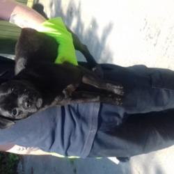 Found dog on 05 Jul 2018 in tallaght Village. found, now in the dublin dog pound...Date Found: 04/07/2018 Location Found: Village