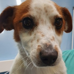 Found dog on 05 Jul 2019 in Terenure. found...South Dublin VetsLike Page 22 hrs ·  This lovely boy was Found in Windmill Park last night at 8.30pm. He has no collar or chip. He is an entire male and is currently with us in Terenure. Please share or phone us on 014555362 if you have any information.