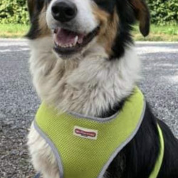 Found dog on 05 Jul 2021 in dunsany. found..Meath Dog Shelter JutnSphlyho 3 eogsnugSgfat so4reh:mdr3mrc2 PMn  ·  This dog was found last weekend in the Dunsany area, not chipped and no ID tag. Reclaim fee and proof of ownership apply. Contact 0870973911