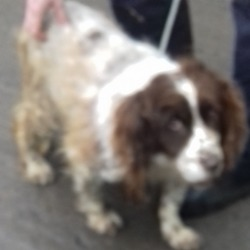 Found dog on 05 Jun 2018 in Knocklyon  rd. found, now in the dublin dog pound...Date Found: