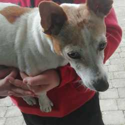 Reunited dog 05 Jun 2019 in ongar. UPDATE REUNITED....found...lost & found pets blanchardtown 