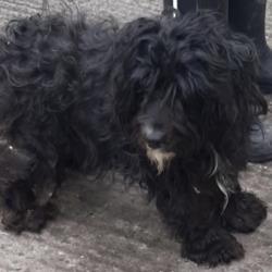 Found dog on 05 Jun 2020 in Tallaght. found, now in the dublin dog pound...Date Found: 03/06/2020 Location Found: Tallaght