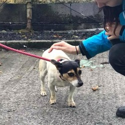 Found dog on 05 Oct 2017 in dublin. found female dog, now in the dublin dog pound...