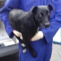 Found dog on 05 Oct 2017 in Whitehall Road , Terenure. found, now in the dublin dog pound... Date Found: Tuesday, October 3, 2017 Location Found: Whitehall Road , Terenure