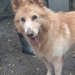 Reunited dog 05 Oct 2020 in tallaght. UPDATE REUNITED....found, now in the dublin dog pound...Date Found: