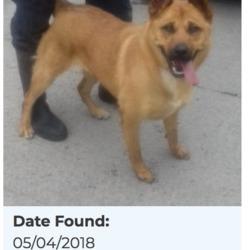 Found dog on 06 Apr 2018 in Glenmore, Rathfarnham. found, now in the dublin dog pound...Date Found: 05/04/2018 Location Found: Glenmore, Rathfarnham
