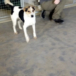 Found dog on 06 Apr 2018 in Johnstown. found...Meath Dog Shelter  This happy little chappy was found in Johnstown village earlier today. If anyone has any information about him, please get in contact so we can get him back home