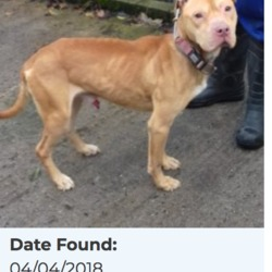 Reunited dog 06 Apr 2018 in Rathlawns, Rathcoole. UPDATE..REUNITED.....WAS MISSING 2.5 YEARS .....found, now in the dublin dog pound....Date Found: