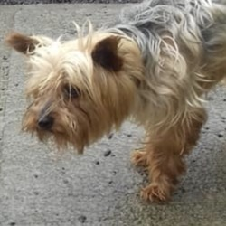 Found dog on 06 Aug 2019 in navan. found...Meath Dog Shelter