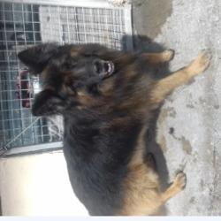 Reunited dog 06 Aug 2019 in Tymon Park. UPDATE OWNER FOUND/.....found, now in the dublin dog pound...Date Found: 04/08/2019 Location Found: Tymon Park