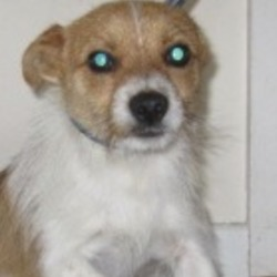 Found dog on 06 Aug 2019 in wicklow. found..Wicklow Dog Pound 9 mins ·  Jed (Pound Name) is a male terrier found in Wicklow town. For futher information please contact Wicklow Dog Pound on 0404 44873. Thank you.
