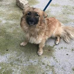 Found dog on 06 Dec 2017 in Trim Road Longwood .. found...1yr old Terrier x..ref 357....found in Trim Road Longwood ...contact Meath pound on 087 0676766..thanks