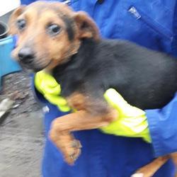 Found dog on 06 Dec 2017 in Village , Clondalkin. found, now in the dublin dog pound... Date Found: Monday, December 4, 2017 Location Found: Village , Clondalkin